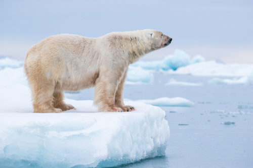 Svalbard photography expedition